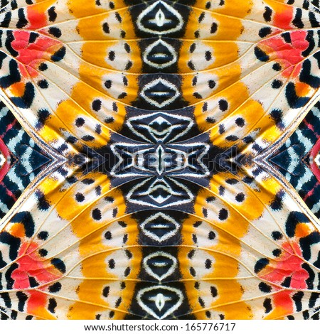 close-up of an Monarch Butterfly Wing - stock photo