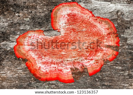 close up of an old rough wood background texture with red mildew - stock photo