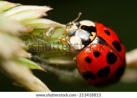 Close-up of Aphids and a ladybird - stock photo