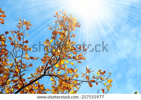 close-up of autumn leaves on the branches against the blue sky - stock photo