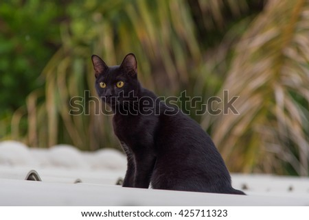 Close up of beautiful black cat on the roof. - stock photo