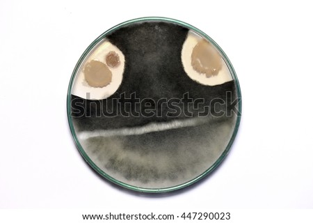 close up of  biochemistry research test fungus growing petri dish in the lab on a white background. - stock photo