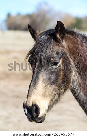 Close Up Of Black Horse's Head Against Brown Field Background On A Bright, Cold And Sunny Day In Colorado Springs, Colorado - stock photo