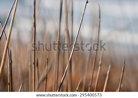 close up of blades of dune grass at a New Zealand surf beach  - stock photo