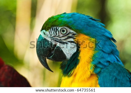 Close Up of Blue and Yellow Macaw - stock photo