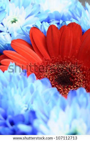 Close up of bouquet of ref flower between blur blue petals for background or texture - stock photo