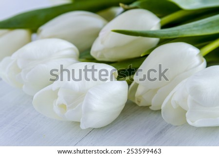 Close up of bouquet of white tulips laying on white wooden table - stock photo