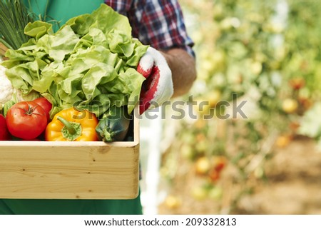 Close up of box with ripe vegetables - stock photo