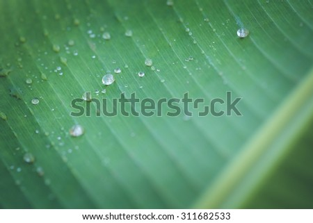 Close up of bright green leaf and water drop - stock photo