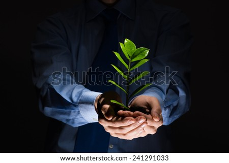 Close up of businessman hands holding small green sprout - stock photo