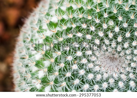 close up of cactus, shallow deep of field - stock photo