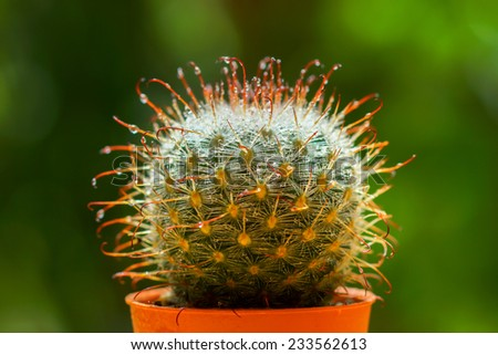 Close up of cactus spines - stock photo
