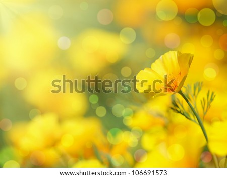 Close-up of California Golden Poppy flowers.Summer background. - stock photo