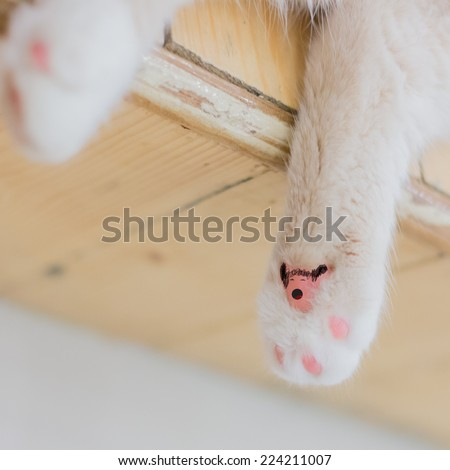 Close-up of cat paw with claws out.,Art paint on Little fluffy kitten's paw - stock photo