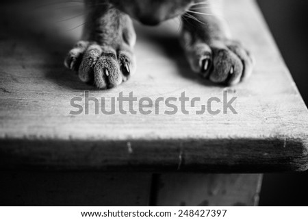 Close Up of Cat Paws while sitting on Table - stock photo