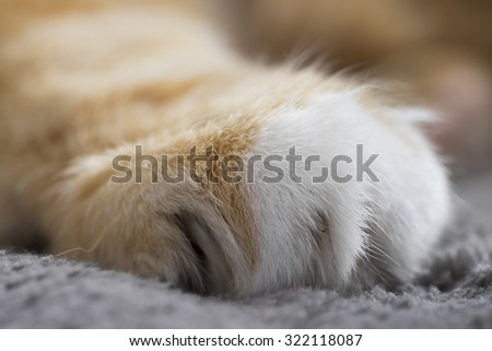 Close-up of Cat's paw - stock photo