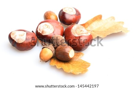 Close-up of chestnuts and acorns on white background. - stock photo