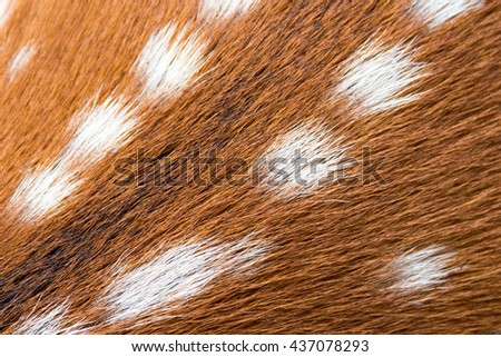 Close up of Chital, spotted deer or axis deer skins for background - stock photo