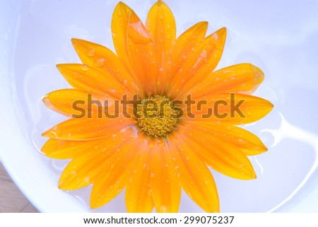 Close up of chrysanthemum flower in bowl - stock photo