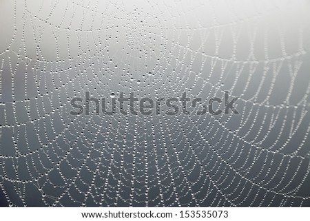 close up of cobweb with morning dew on gray background - stock photo
