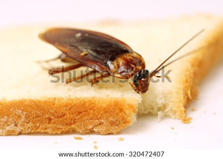 Close up of cockroach on a slice of bread  - stock photo