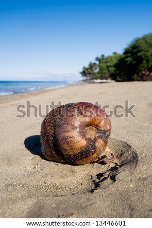 Close-up of coconut on sandy beach - stock photo