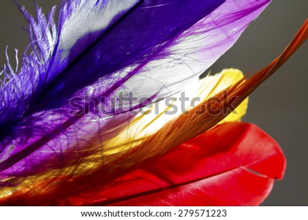 Close-up of colorful feathers with light on background. - stock photo