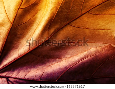 Close up of colorful  leaf orange and violet - stock photo
