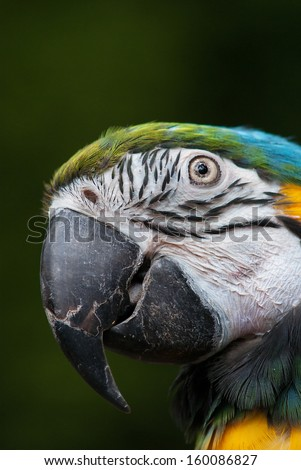 Close up of colorful parrot - stock photo