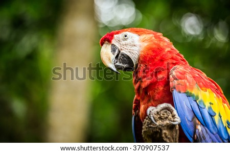 Close up of colorful scarlet macaw parrot - stock photo