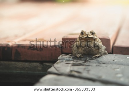 Close up of Common Toad in the garden,vintage filter - stock photo
