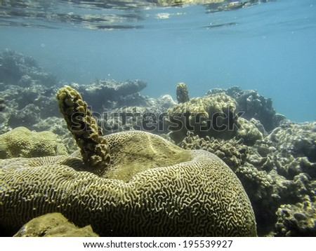 close up of coral reef and tropical in  red sea - stock photo