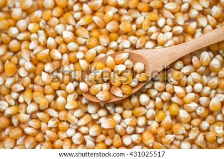 Close up of corn grains. Whole background. Corn seeds background.  - stock photo
