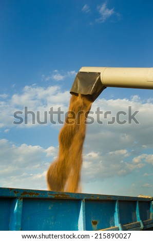 Close up of corn harvesting by combine harvester - stock photo