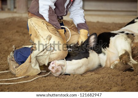 Close up of Cowboy lassoing cow - stock photo