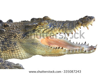 Close up of crocodile with open mouth showing teeth isolated on a white background - stock photo
