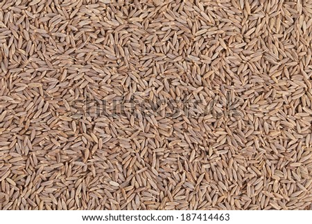 Close up of cumin seeds. Macro. Whole background. - stock photo