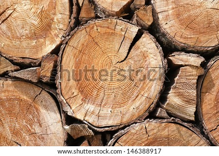 Close up of cut tree trunk - stock photo