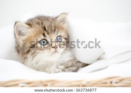 Close up of cute little tabby kitten laying on blanket - stock photo
