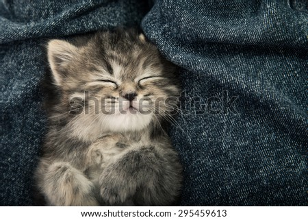 Close up of cute tabby  kitten sleeping on blue jeans background,vintage filter - stock photo