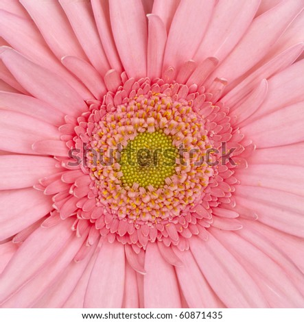 close up of  daisy flower - stock photo
