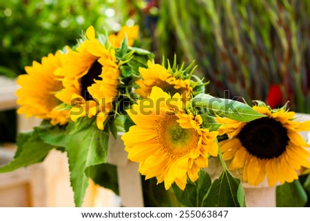 Close-up of decorative yellow sunflowers - stock photo