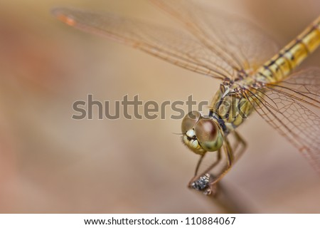 close up of dragonfly on branch - stock photo