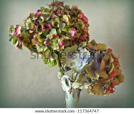 Close up of dry colorful hydrangea flowers in a vase - stock photo