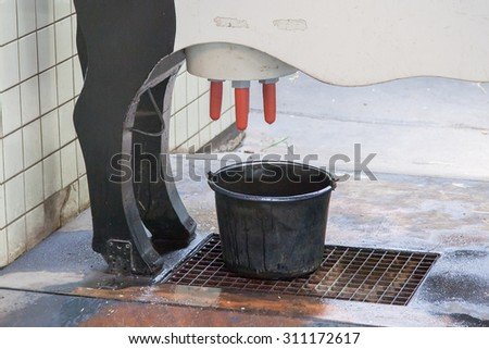 Close up of dummy cow, learning to milk - stock photo