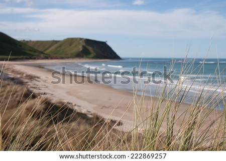 close up of dune grasses with blurred beach background  - stock photo