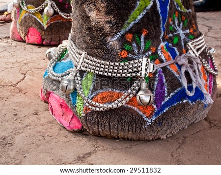 Close up of elephants foot decorated and painted for Jaipur elephant Festival, India - stock photo