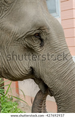 close up of face an elephant at elephants camp Ruammit Karen village,Chiang Rai in Thailand - stock photo