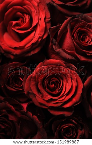 Close up of faded roses bouquet - stock photo