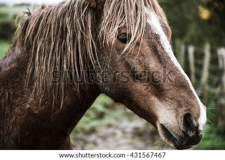 Close up of farm horse, shallow depth of field - stock photo